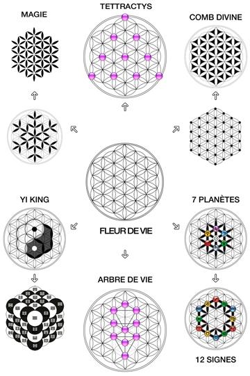 La fleur de vie matrice de l 39 ensemble des syt mes symboliques - Symbole de la vie ...